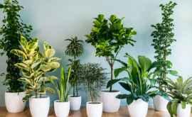Пять целебных растений, которые нужно иметь в доме