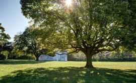 Исследование: 20 лет назад Земля перестала зеленеть из-за уменьшения влажности воздуха