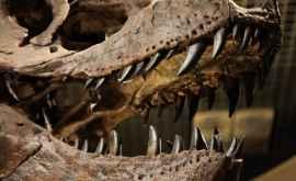Ученые нашли первые доказательства существования пернатых полярных динозавров в Австралии