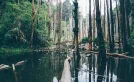 Pădurile din Amazon, accelerarea schimbărilor climatice