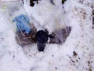 La Ciocana a fost găsită o fîșie forestieră minată (VIDEO)