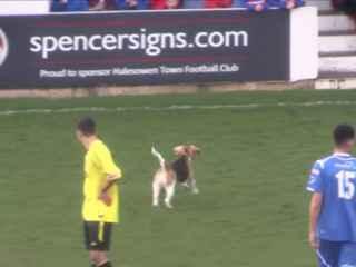 Primul jucător care a fost accidentat de un cîine (VIDEO)