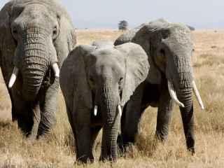 În India a fost deschis un spital pentru elefanţi (VIDEO)