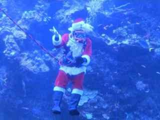 California: Moş Crăciun a apărut... în acvariu