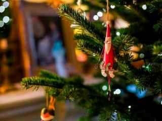На Чеканах к праздникам украсили елку, отнятую у жителей Рышкановки (ВИДЕО)