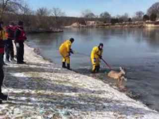 Căprioară salvată de pompieri de pe gheața subțire a unui iaz (VIDEO)