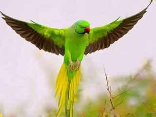 Невообразимо! В Бразилии арестовали попугая (ВИДЕО)