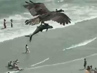 """O pasăre de pradă cu un """"rechin"""" în gheare, filmată în SUA (VIDEO)"""
