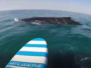 Удивительное видео: серфер встретился с китами (ВИДЕО)