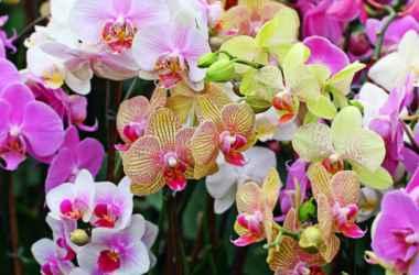 Никогда не разводите в доме орхидеи! Их красота опасна