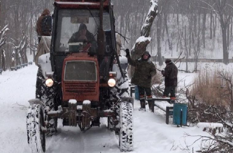 De ce la Chișinău se taie copacii