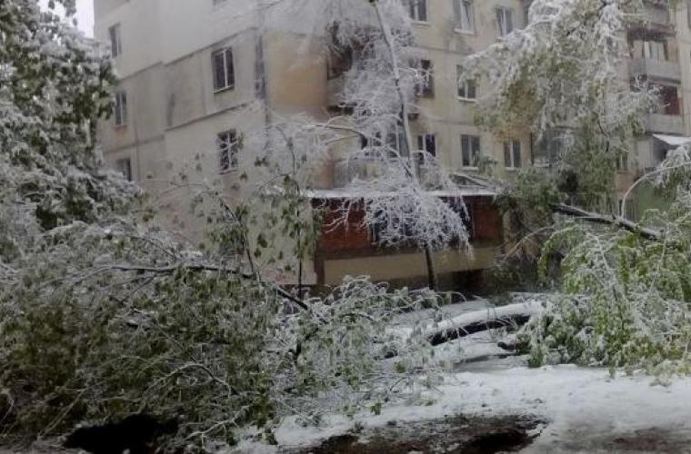 S-a trezit cu un copac în apartament (FOTO)
