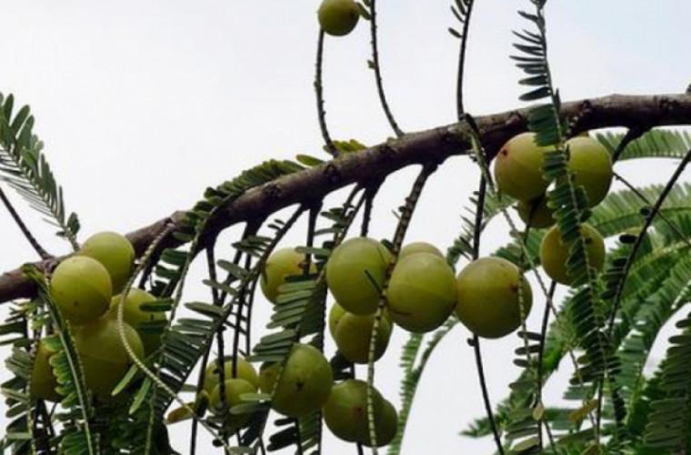 Patru greșeli mari pe care le faci cînd gătești cu ulei de măsline