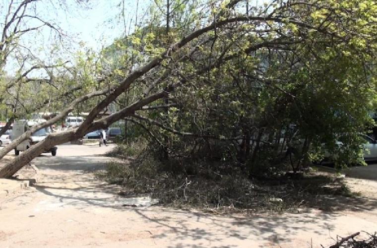 Străzile sînt inundate de arbori căzuţi (VIDEO, FOTO)