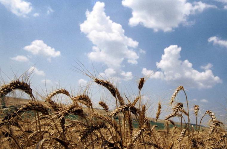 Politica de subvenționare a agricultorilor din Moldova pentru următorii 5 ani a fost aprobată