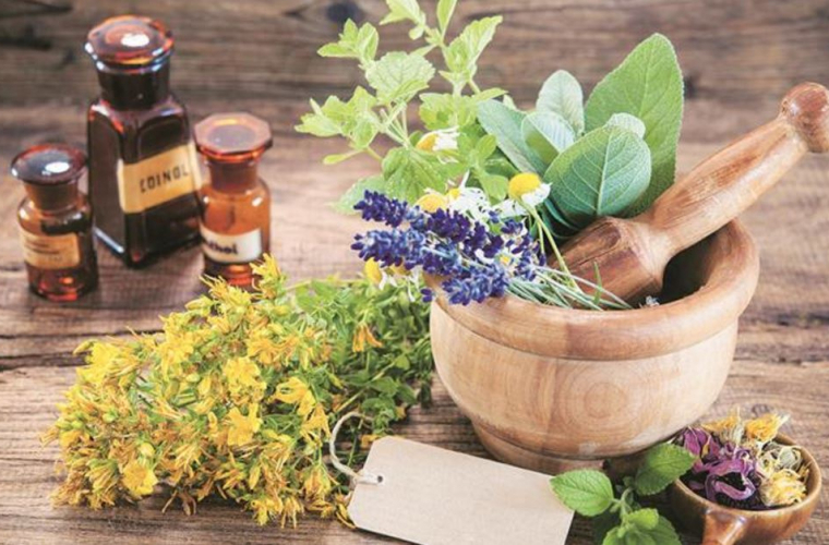 Peste 28 de mii de specii de plante au proprietăţi medicinale