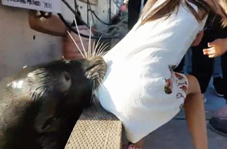 O fată a fost trasă de un leu de mare în apă (VIDEO)