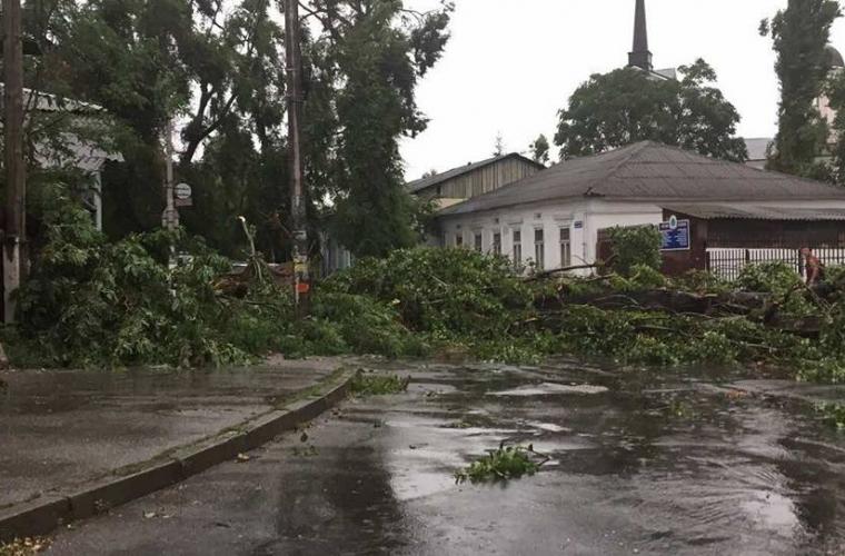 """Un copac din capitală a căzut """"în brațele unei bănci"""" (FOTO)"""