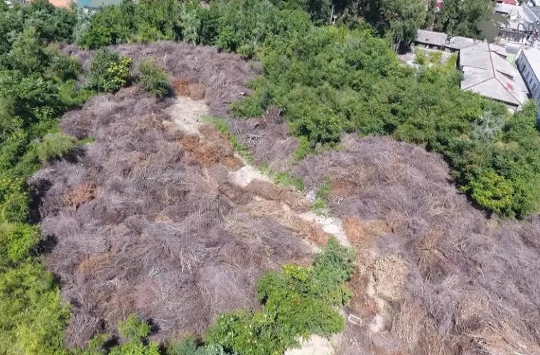 Primăria solicită în jur de 2 milioane de lei ca să rezolve problema crengilor