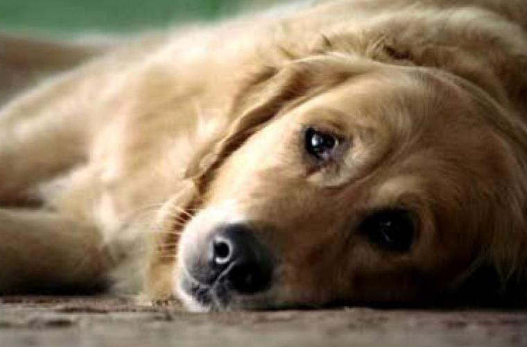 Pentru violenţă faţă de animale pot fi introduse sancțiuni penale