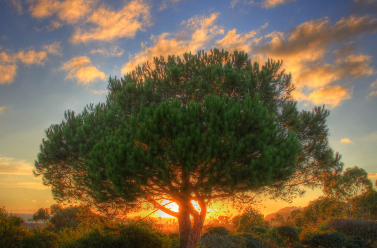 Copaci care nu au ce căuta în grădina ta