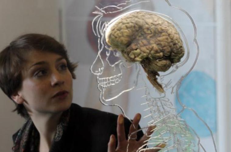 La ce vîrstă atinge creierul maturitatea