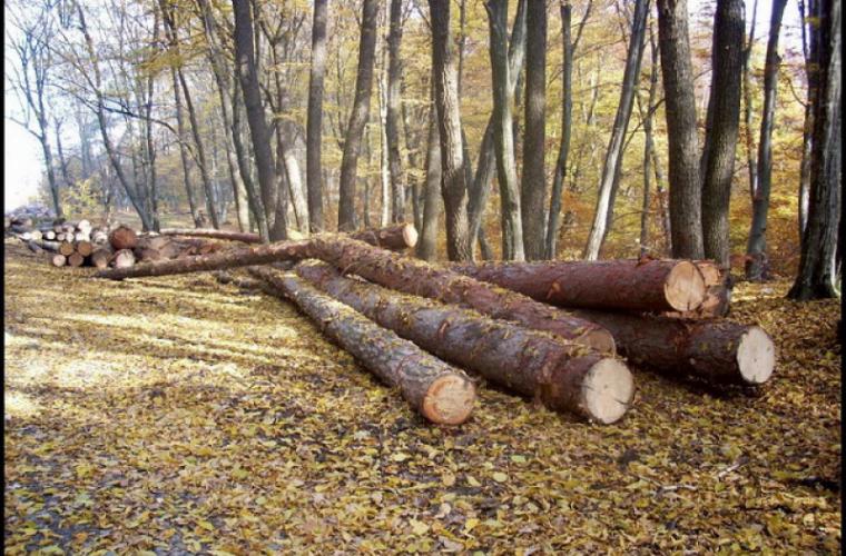 """70 de copaci """"au dispărut"""" dintr-o pădure din Vulcănești"""