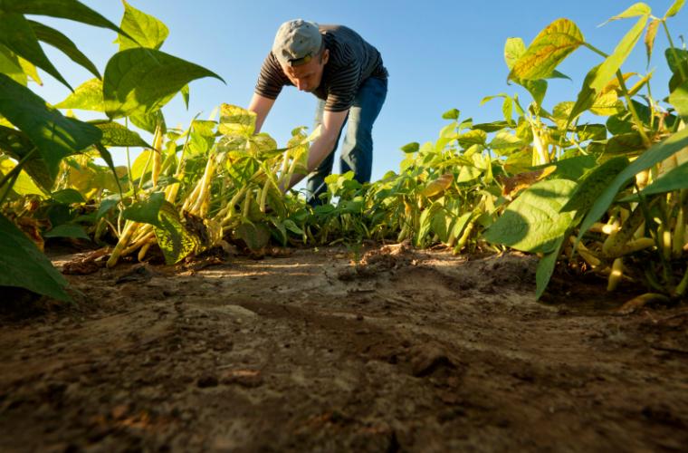 Doar 1% din totalul investițiilor străine directe merg în agricultură