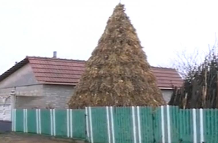 Pom de Crăciun din ciocleji împodobit la Sîngerei (VIDEO)