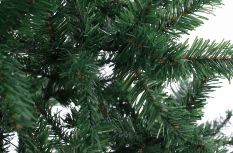 Что делать, чтобы живая елка дольше стояла?