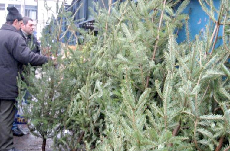 Vînzarea Pomilor de Crăciun s-a activizat după 20 decembrie