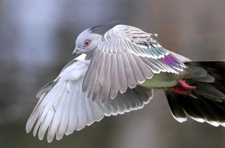 Englezoaică amendată pentru hrănirea porumbeilor