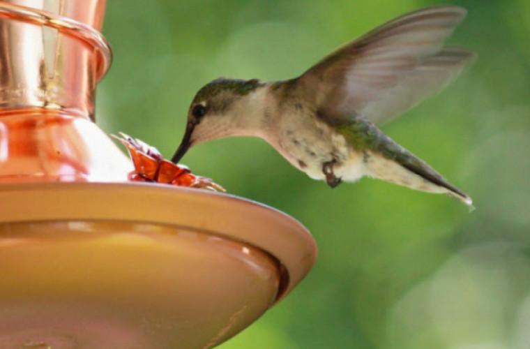 Hrănitor pentru păsări meșterit cu mîinile proprii (VIDEO)