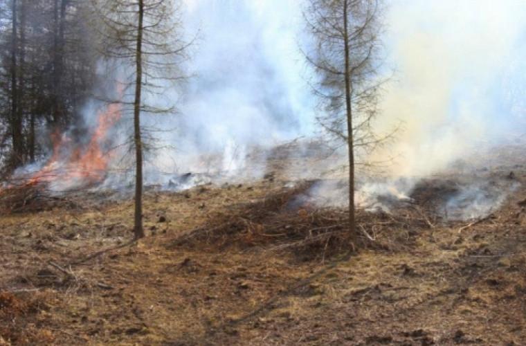 Uimitor – Aceste păsări de pradă dau foc în mod intenționat pădurilor (FOTO)