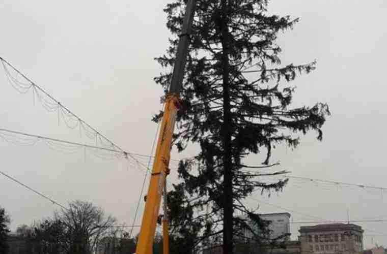 Banii pentru transportarea bradului din Ucraina, pe drum spre Chișinău