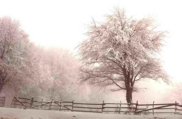 Prognoza meteo pentru 25 ianuarie