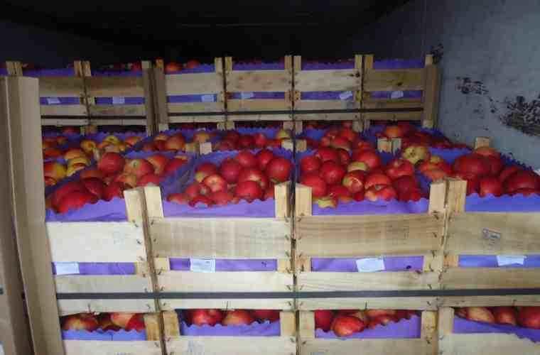 Rusia a blocat importul a peste 40 de tone de mere din Moldova
