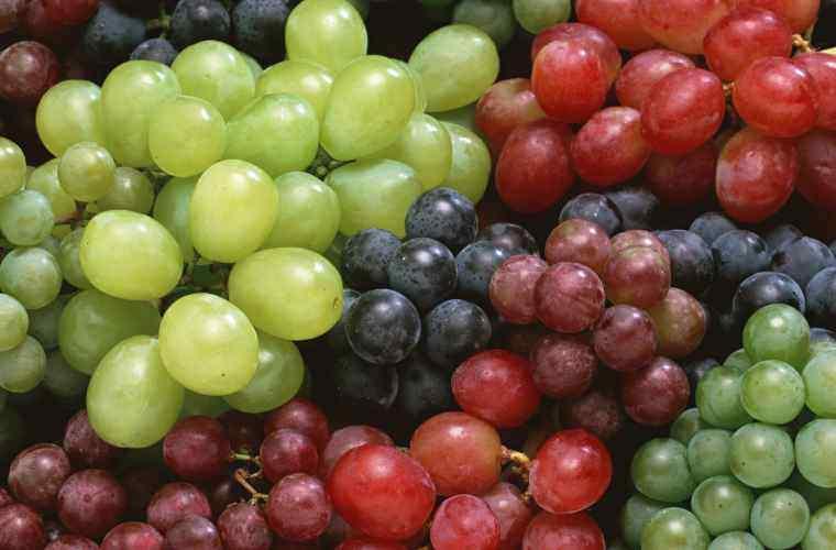 Cîți struguri de masă a colectat și exportat Moldova