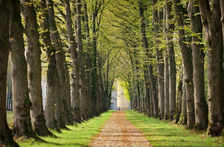 O modalitate sigură de înmulțire a copacilor!
