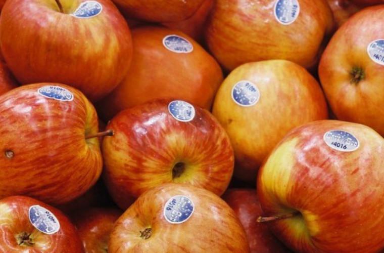 Motivul pentru care sute de kilograme de fructe au fost retrase din comerţ