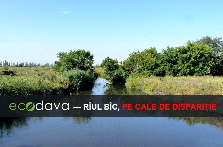 Rîul Bîc, pe cale de dispariţie (VIDEO/FOTO)
