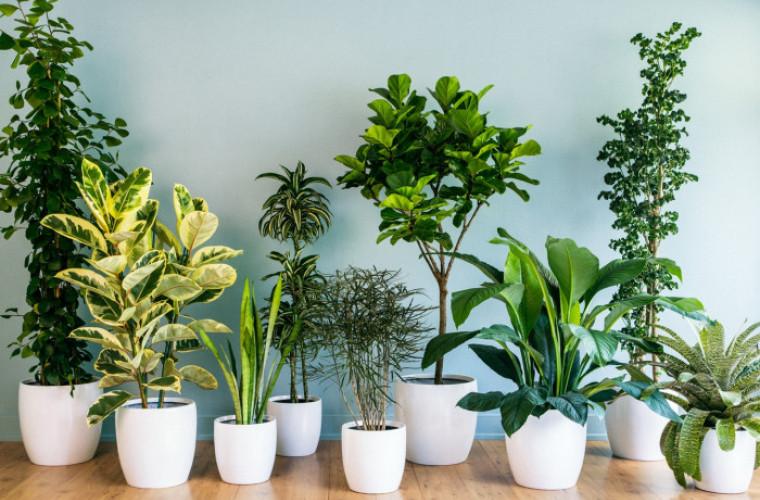 5 plante vindecatoare pe care trebuie sa le ai in casa