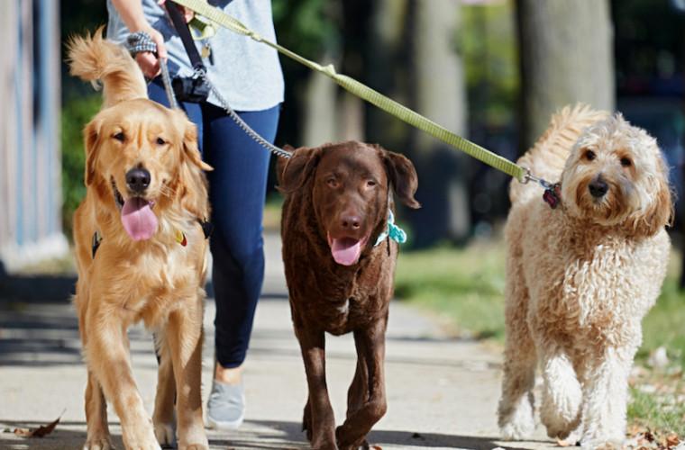 Oamenii de ştiinţă avertizează cu privire la plimbările cu animalele de companie