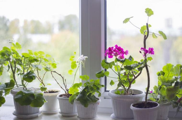 8 motive pentru care ar trebui să-ți iei plante de apartament