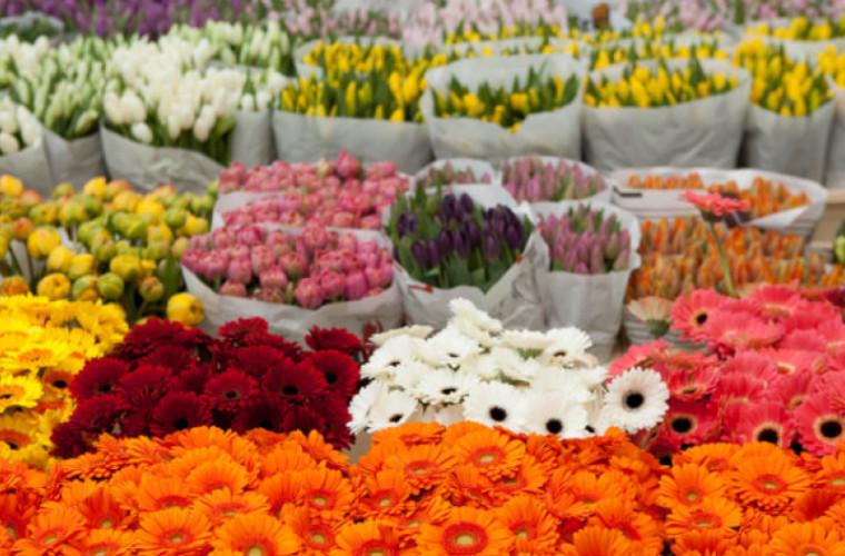 Opinie: Chișinăul are nevoie de mai multe chioșcuri de vînzare a florilor