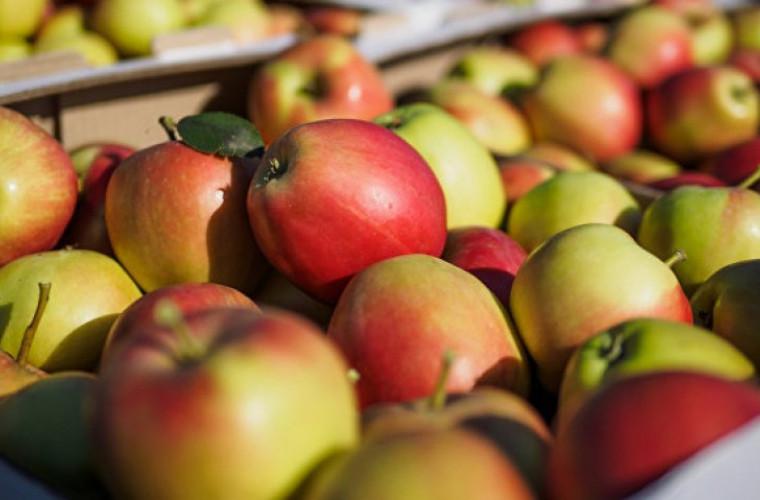 Moldova a exportat în Rusia un volum record de mere