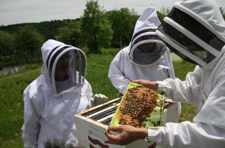 circa-20-de-apicultori-moldoveni-vor-primi-cite-80-de-stupi-verticali