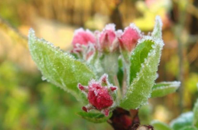 Meteorologii au emis Cod Galben de îngheţ