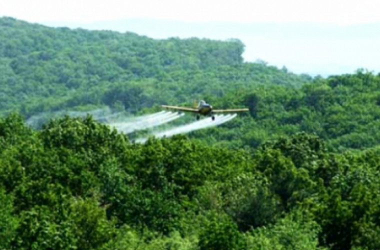 """""""Moldsilva"""" va dezinsectiza pădurile"""