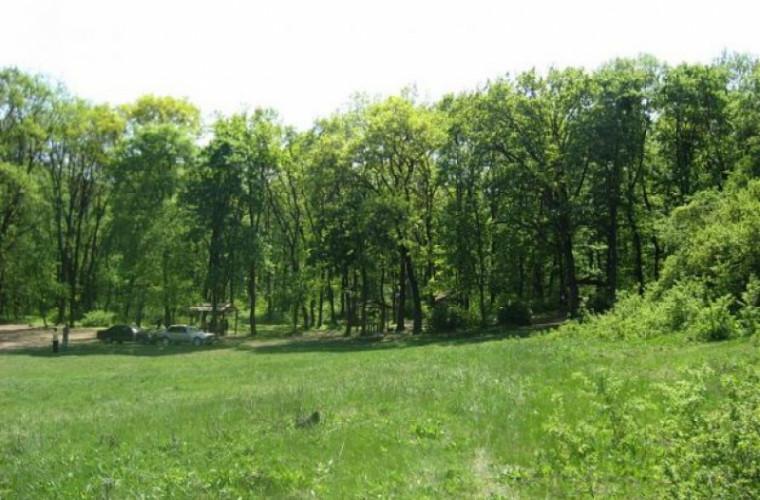 În pădurile din Moldova a început lupta cu dăunatorii